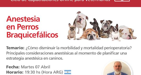 Anestesia para Perros Braquicefálicos